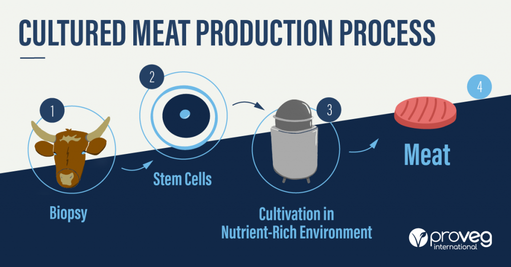 What is cultured meat? This is the production process